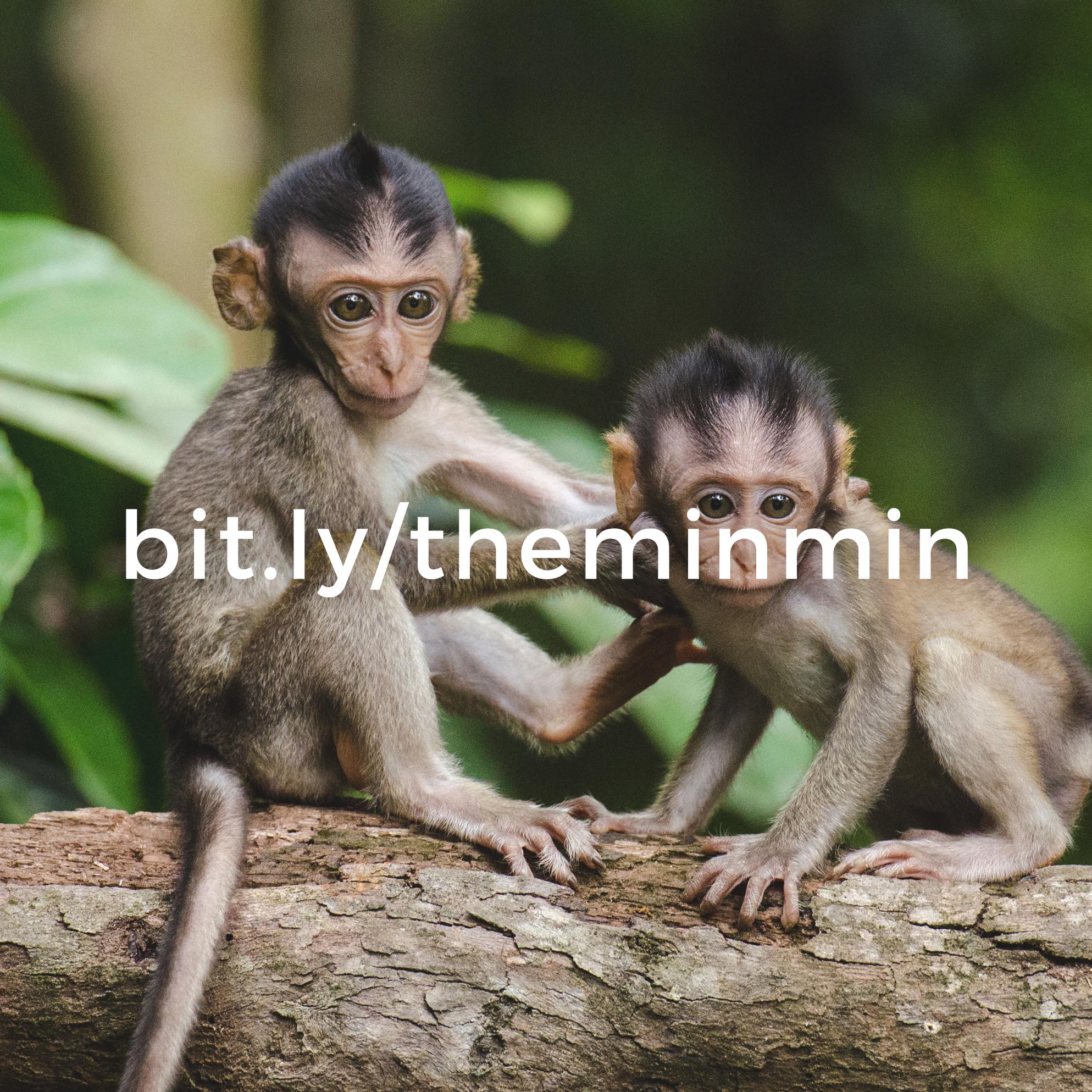 monkeys-bitly.jpg