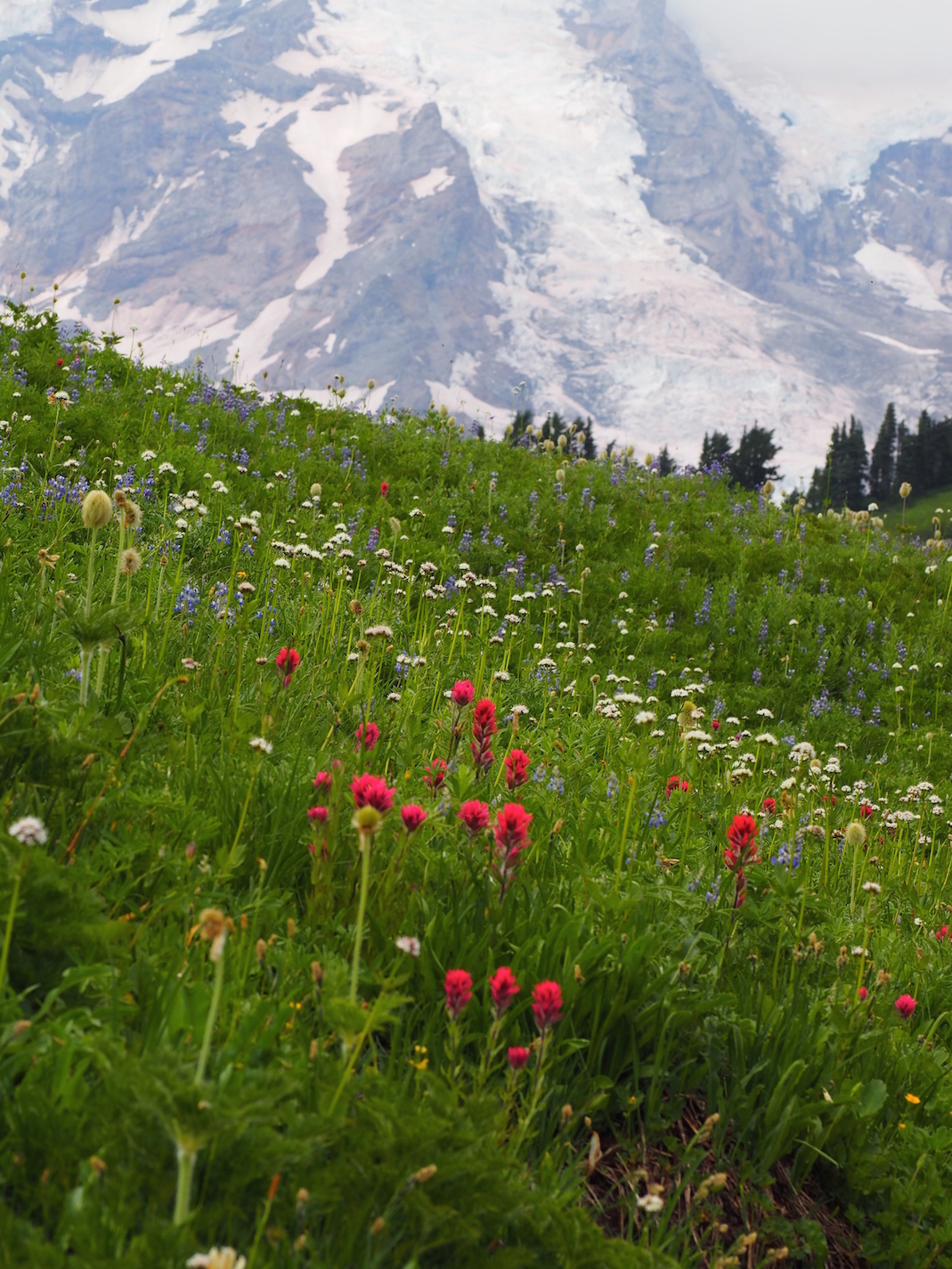 Mountain Meadow, Mt. Rainier, Washington