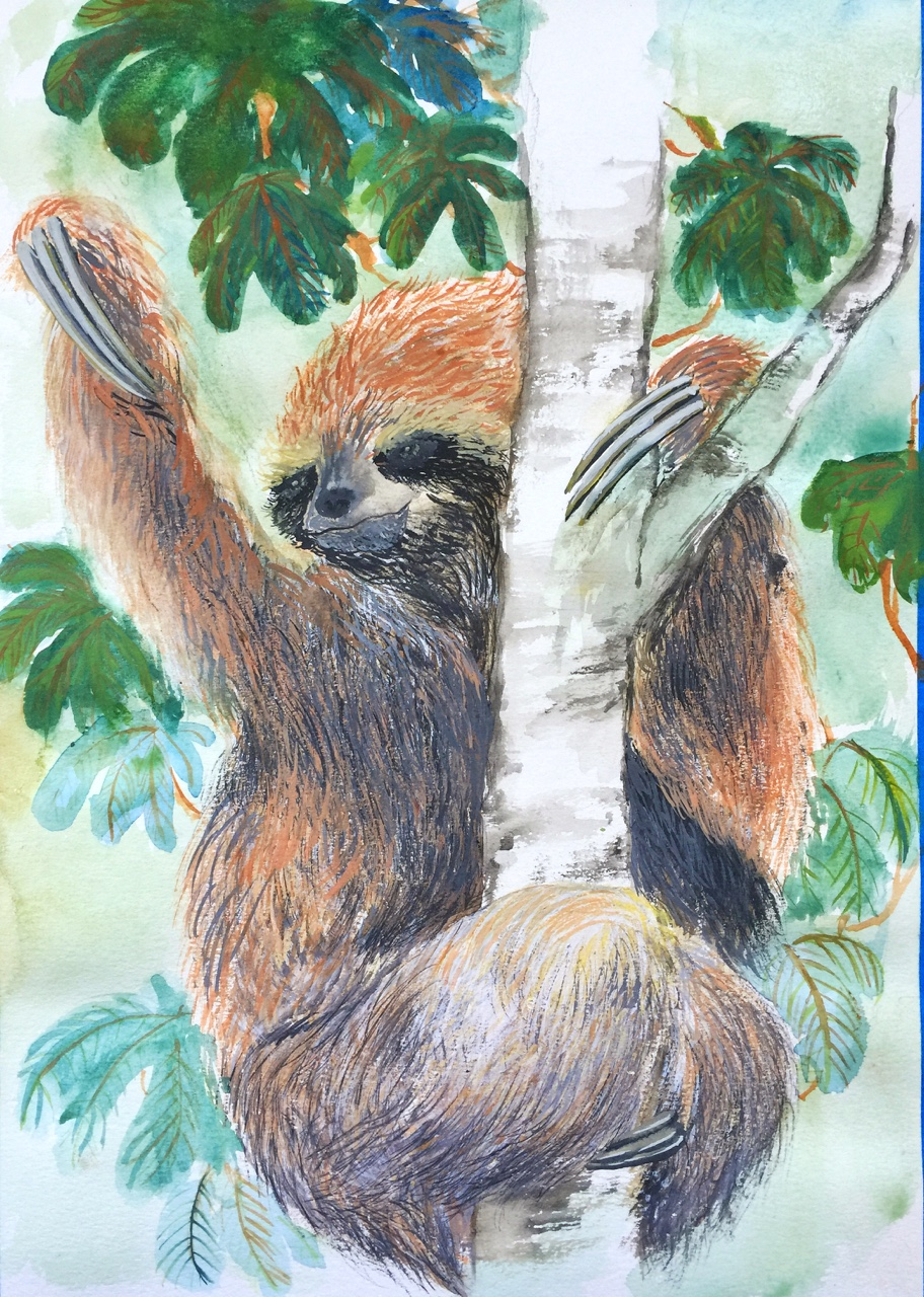 3-Toed Sloth Throwing All The Effs It Has Into The Air