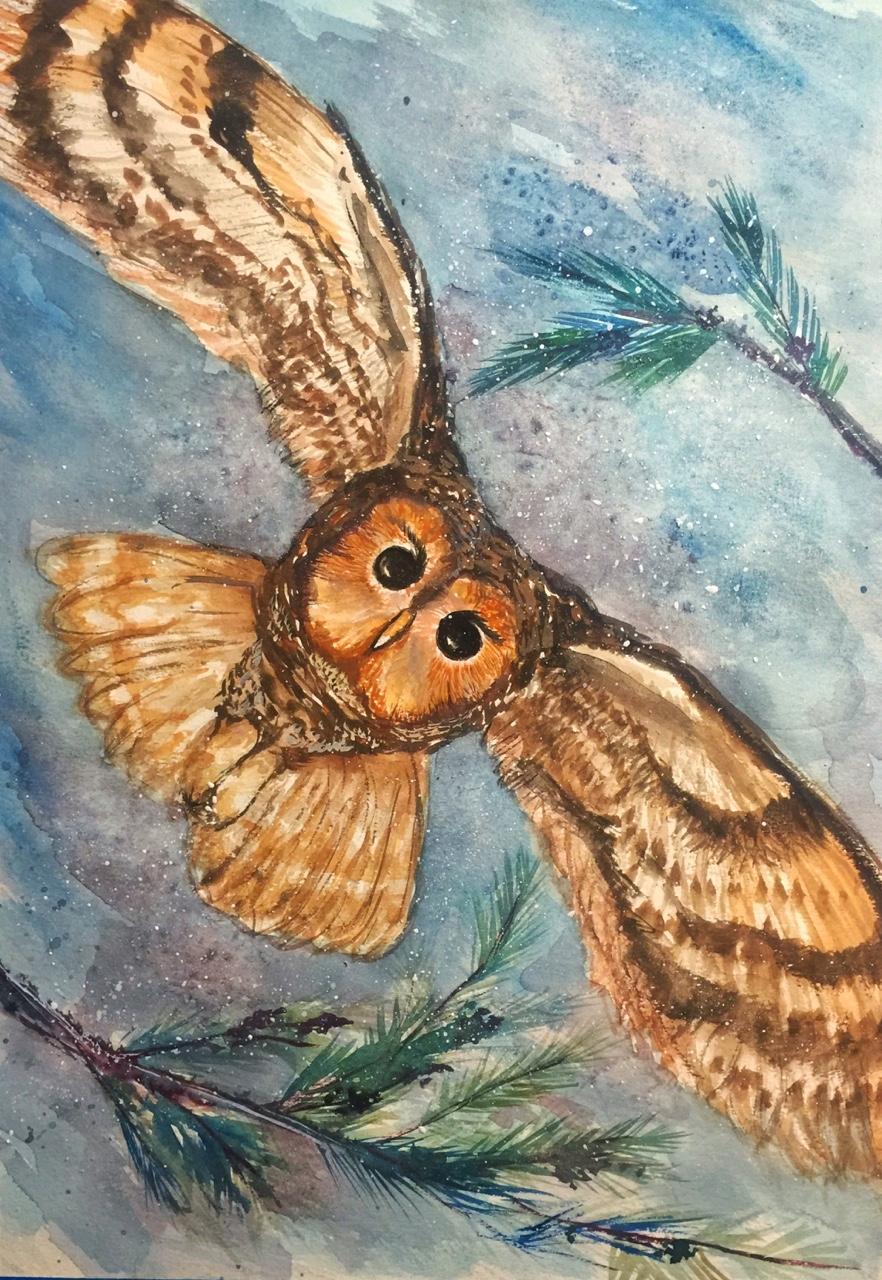 Tawny Owl In Flight