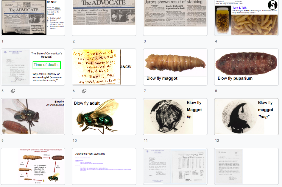 Lesson 2x Forensic Entomology By River X Suh