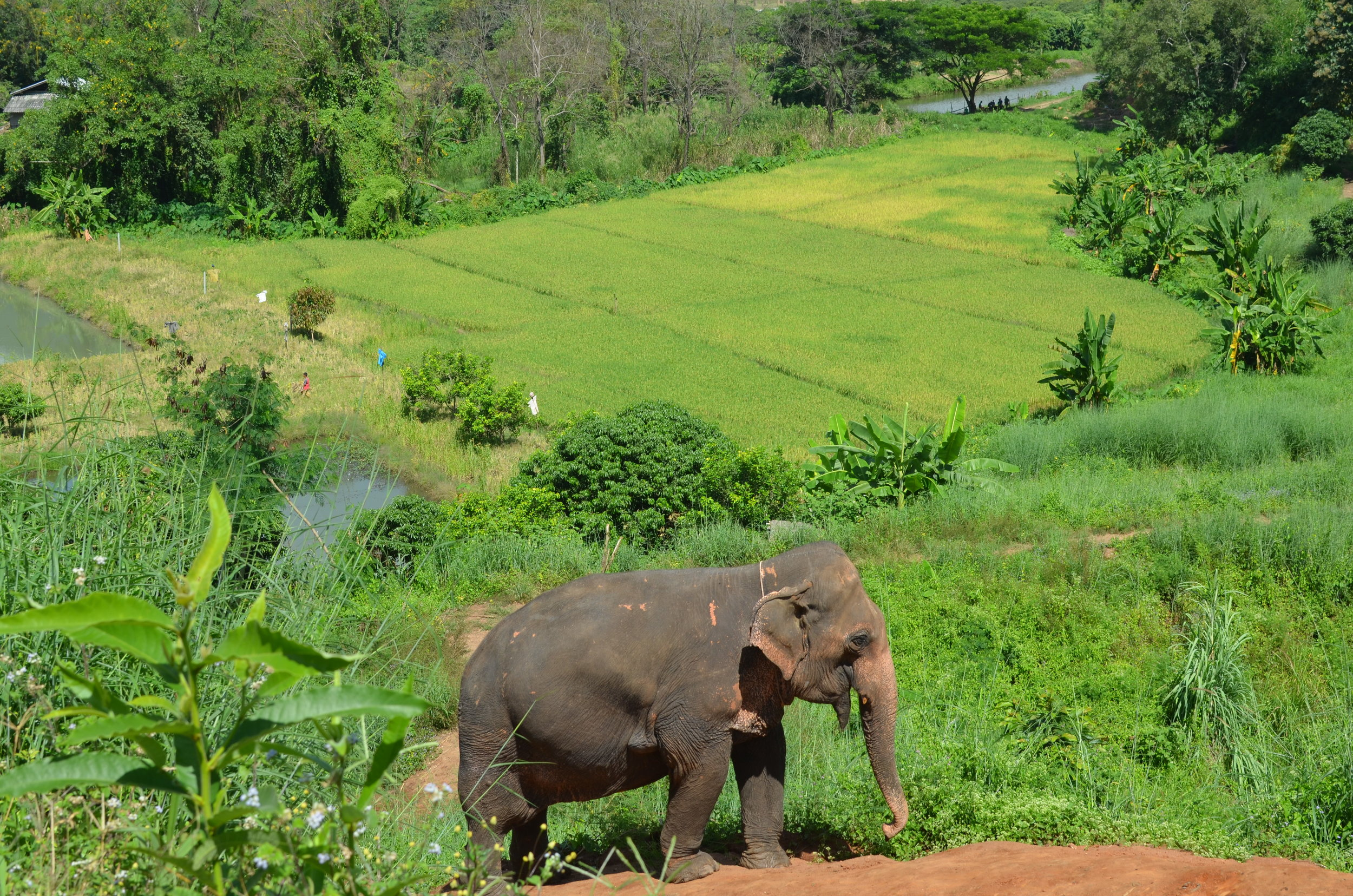 View of the valley where Happy Elephant Home is located just outside of Chiang Mai