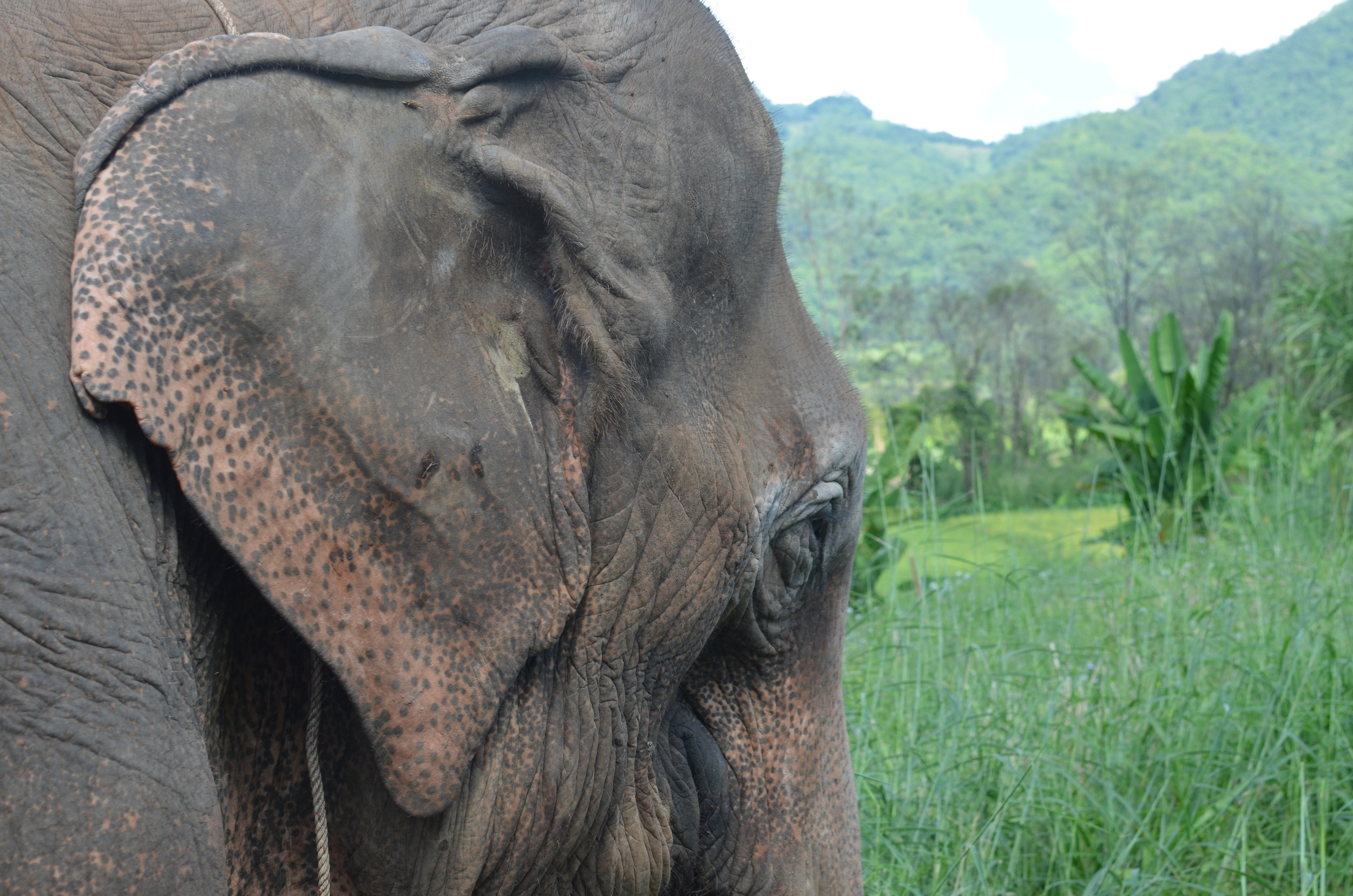 #Elephantselfie