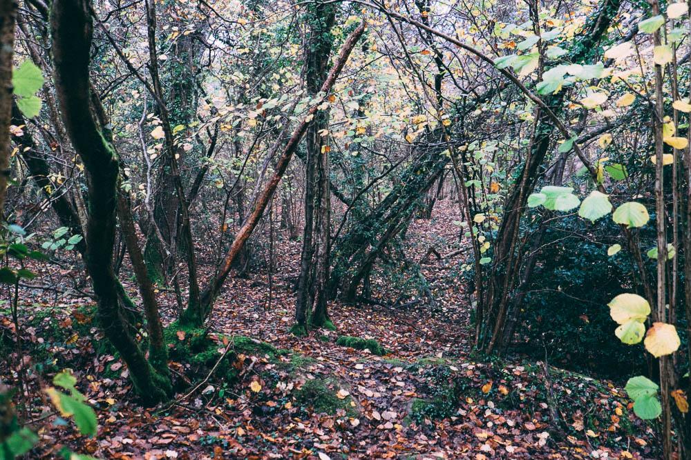 Black Fox Woodland Produce