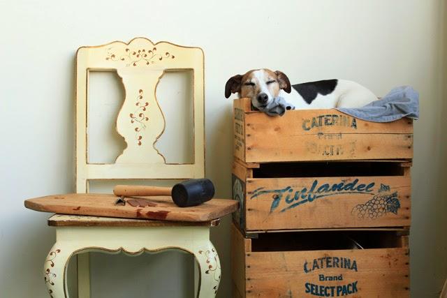 Dwayne+The+FOUNT+Shop+Dog.jpg