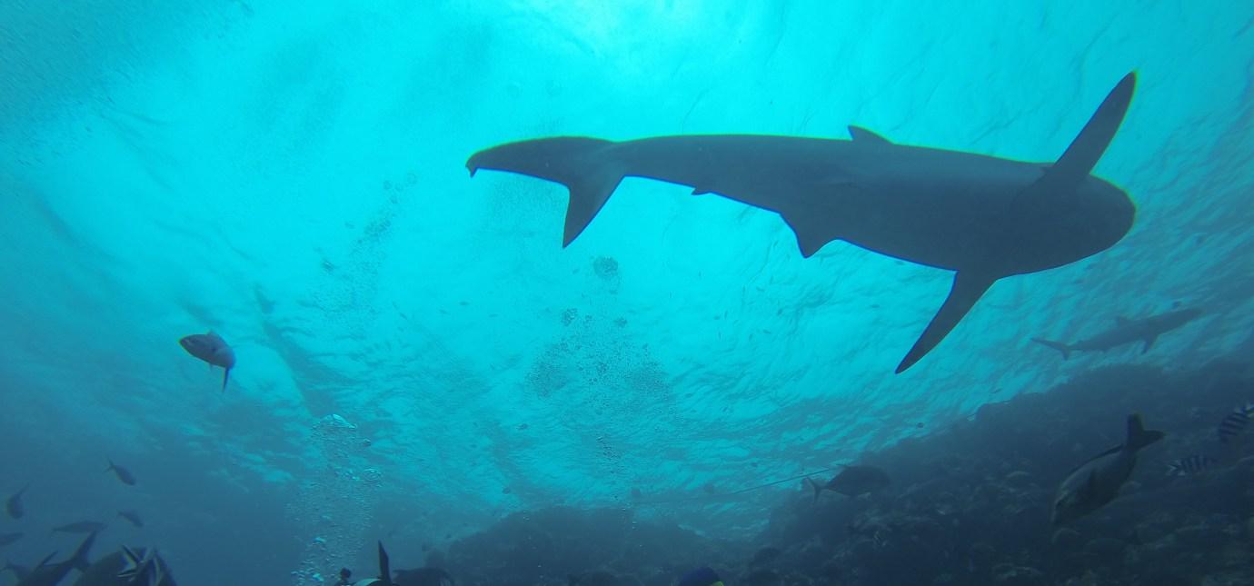 Alexandra-DiGiacomo-shark-conservationist