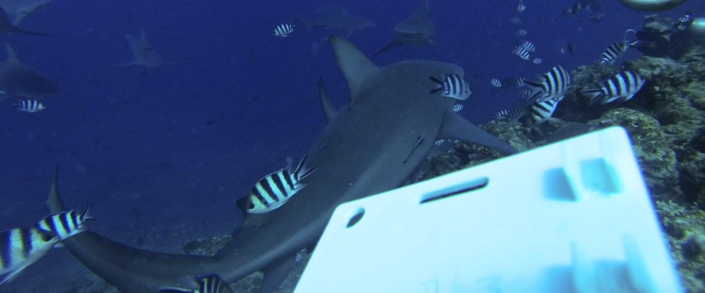 Alexandra-DiGiacomo-shark-dive-1.jpg