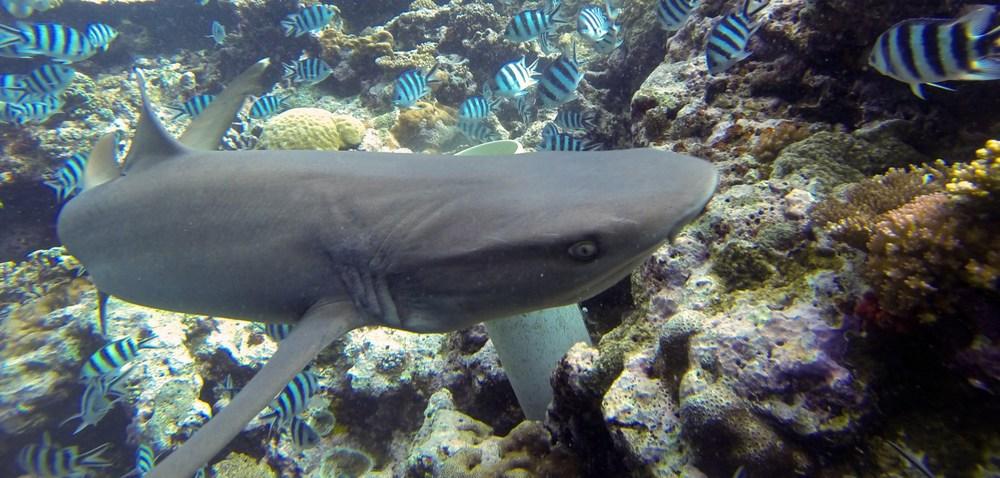 Alexandra-DiGiacomo-shark-dive-2.jpg