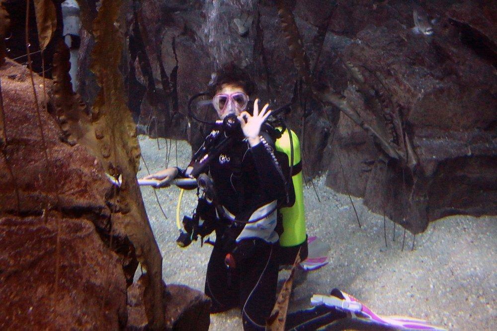 Copy of Shark Tank, Norwalk Aquarium, CT