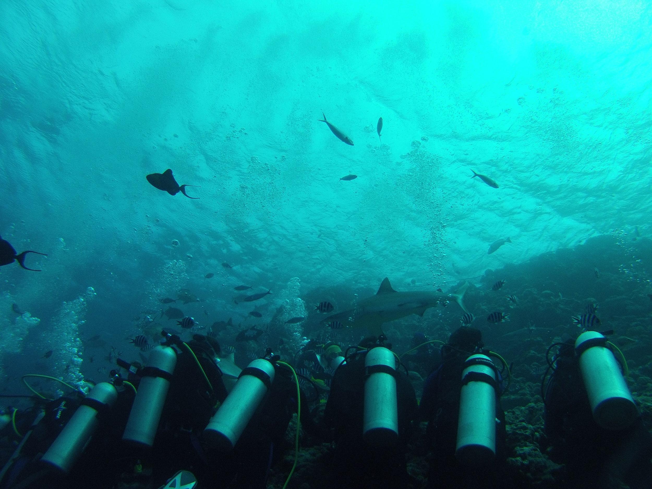 Copy of Observing sharks, Fiji
