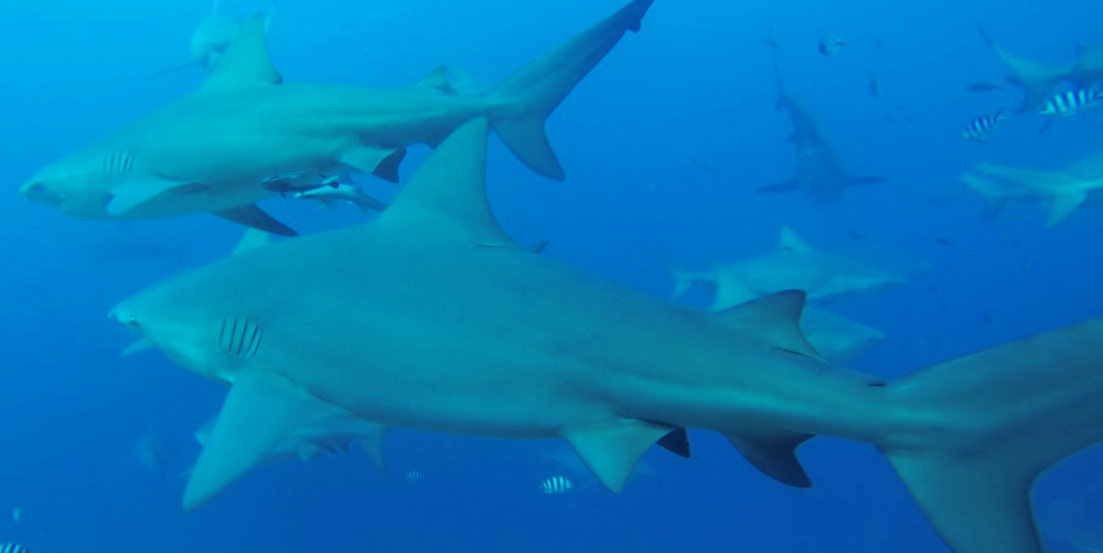 Alexandra-DiGiacomo-shark-dive.png