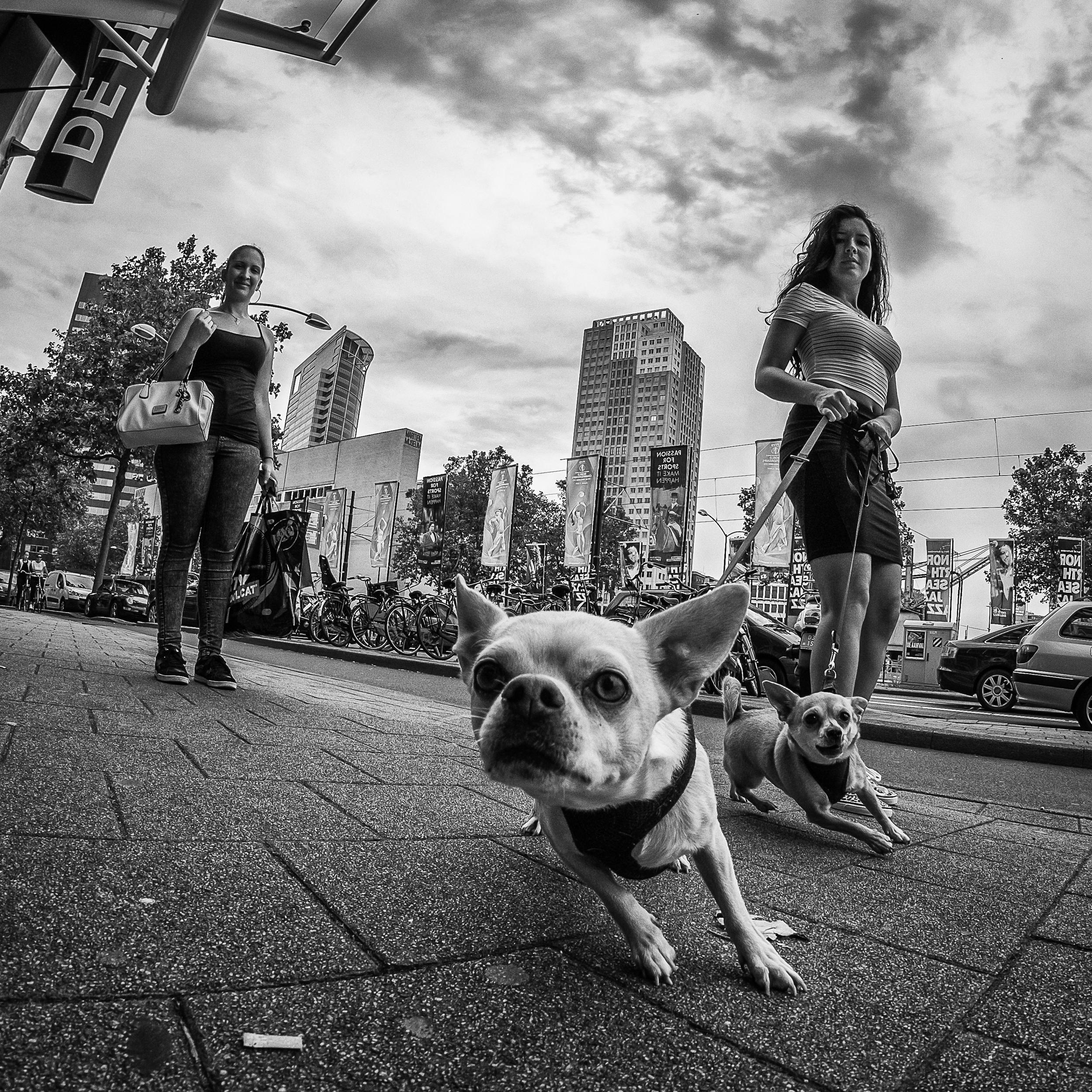 Rotterdam Street Photo-254.jpg