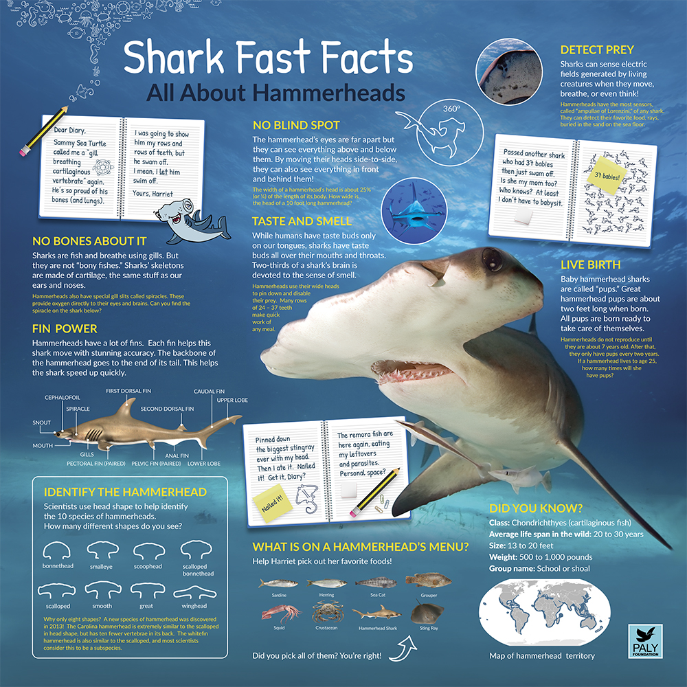 Hammerhead_Fast_Facts_Panel_Paly_Foundation_Web.jpg