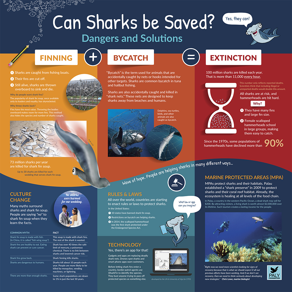 Hammerhead_Dangers_And_Solutions_Panel_Paly_Foundation_Web.jpg