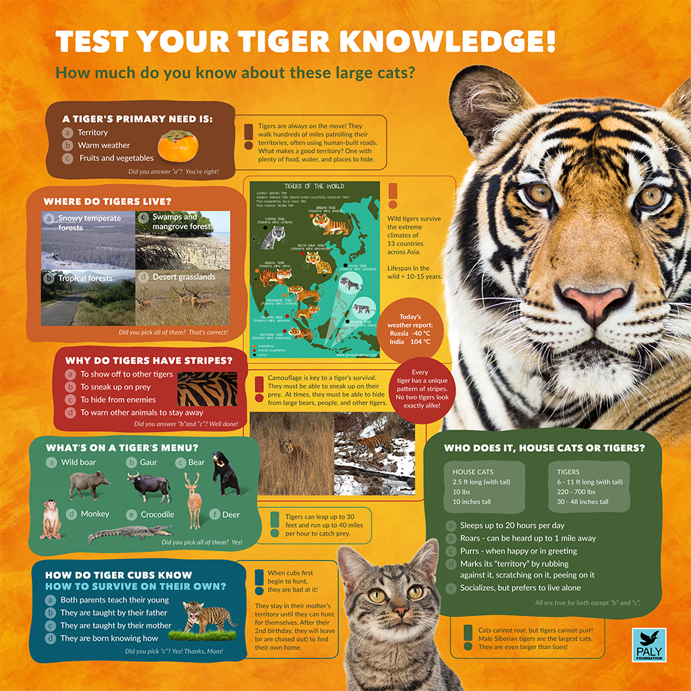 Tiger_Fast_Facts_Paly_Foundation_Web.jpg
