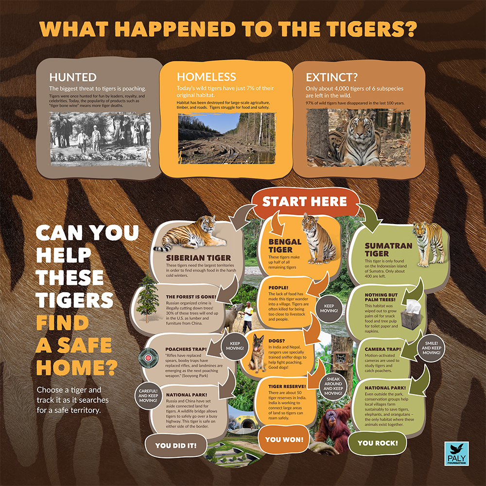 Tiger_Dangers_and_Solutions_Paly_Foundation_Web.jpg
