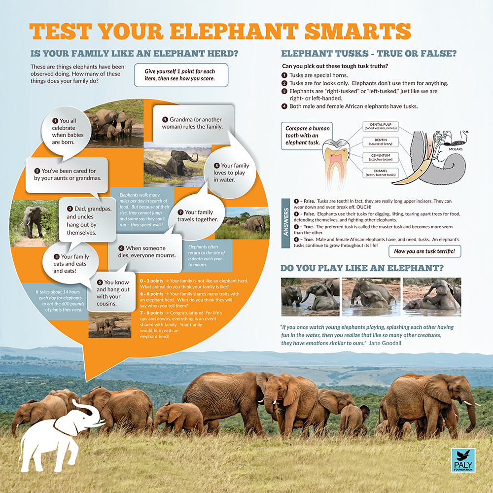 Elephants_Fast_Facts_Paly_Foundation_Web.jpg