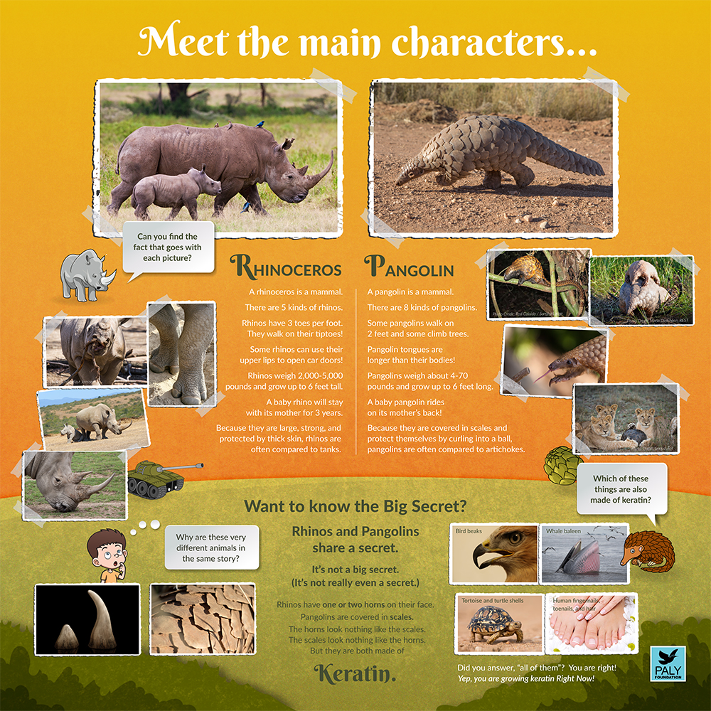 Rhino_Pangolin_Fast_Facts_Paly_Foundation_Web.jpg