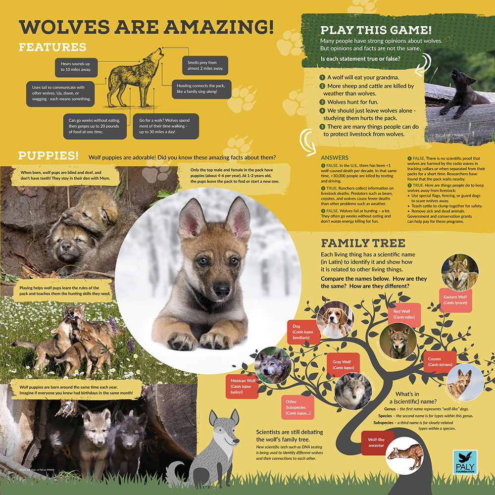 Wolves_Fast_Facts_Paly_Foundation_Web.jpg