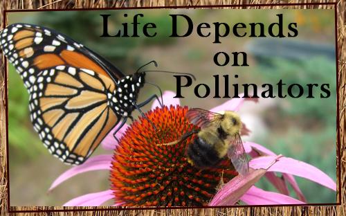 Pollinators-Exhibit-Coming-Soon.png