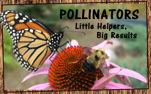 Pollinators-Results-Exhibit-Coming-Soon.png