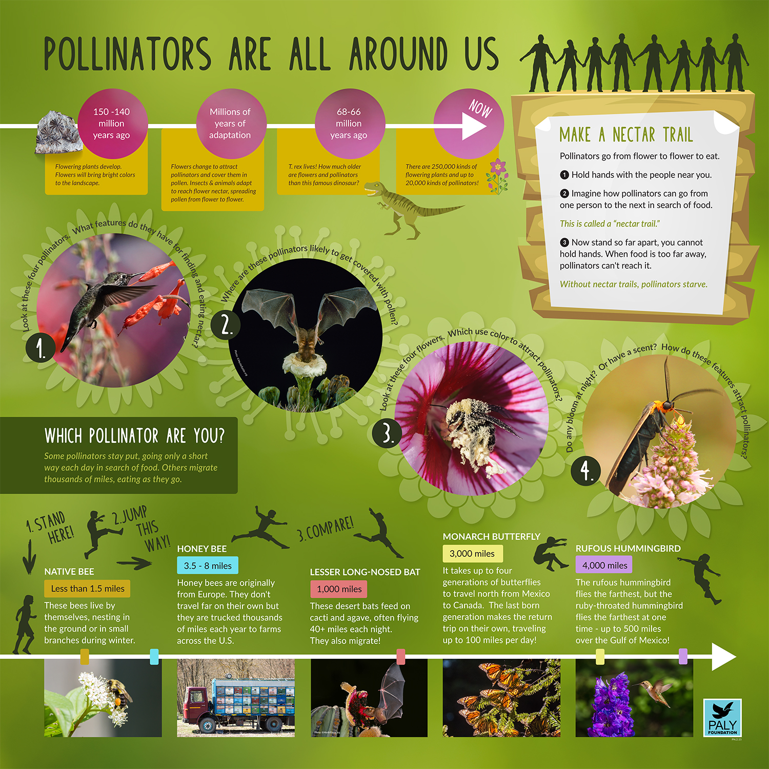Pollinators_Fast_Facts_Paly_Foundation_Web.jpg