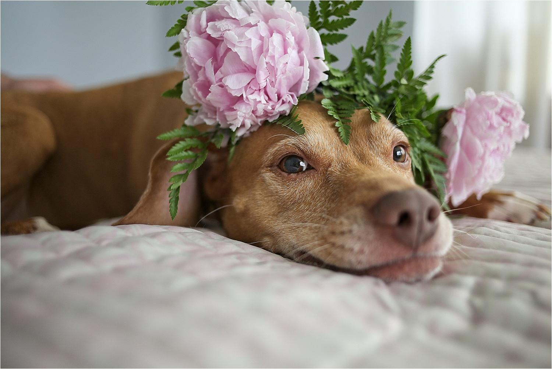 Blacksburg-Virginia-Pet-Photographer-Holly-Cromer_0001.jpg