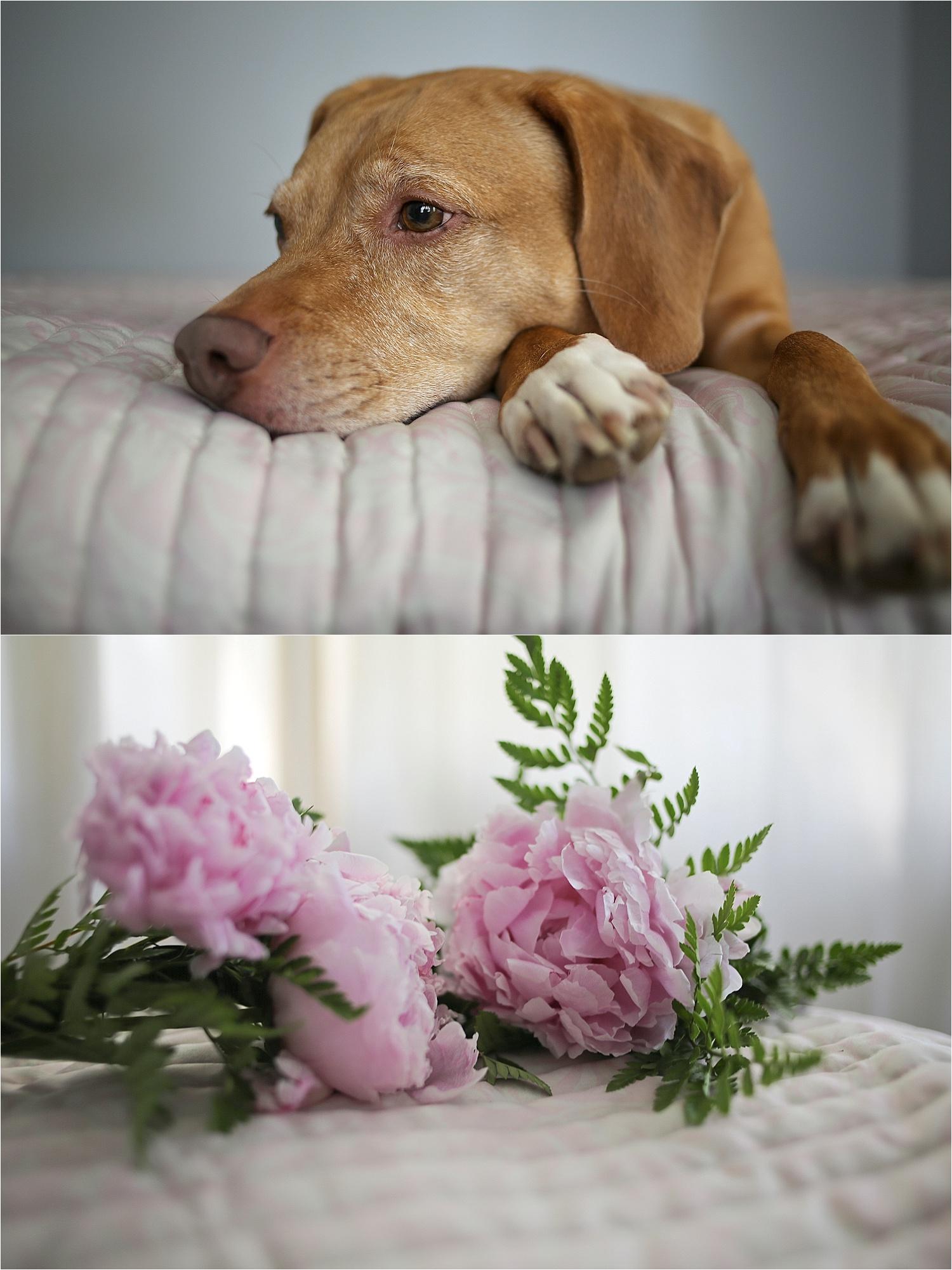 Blacksburg-Virginia-Pet-Photographer-Holly-Cromer_0002.jpg