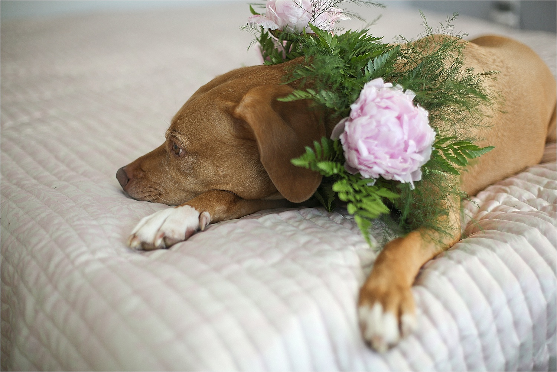 Blacksburg-Virginia-Pet-Photographer-Holly-Cromer_0004.jpg
