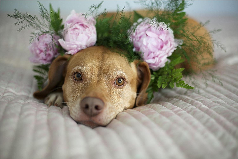 Blacksburg-Virginia-Pet-Photographer-Holly-Cromer_0005.jpg