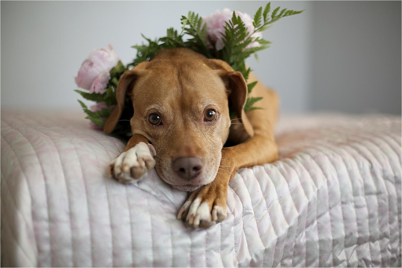 Blacksburg-Virginia-Pet-Photographer-Holly-Cromer_0007.jpg