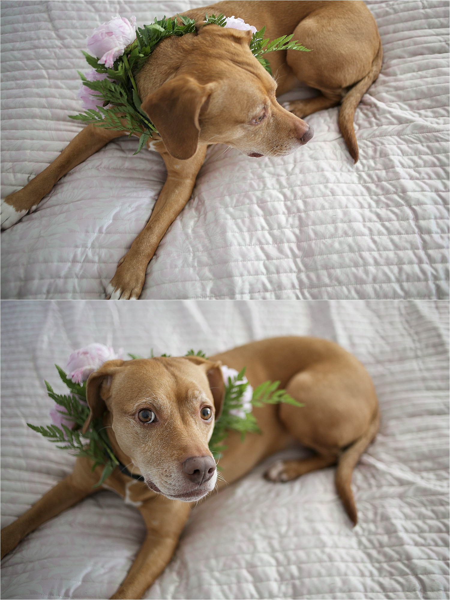 Blacksburg-Virginia-Pet-Photographer-Holly-Cromer_0008.jpg