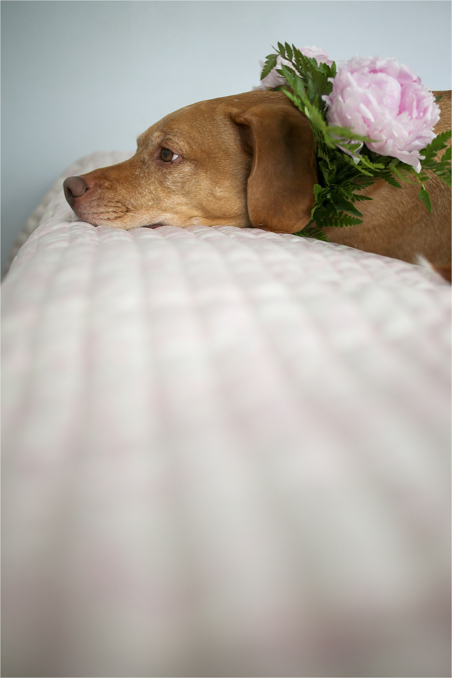 Blacksburg-Virginia-Pet-Photographer-Holly-Cromer_0009.jpg