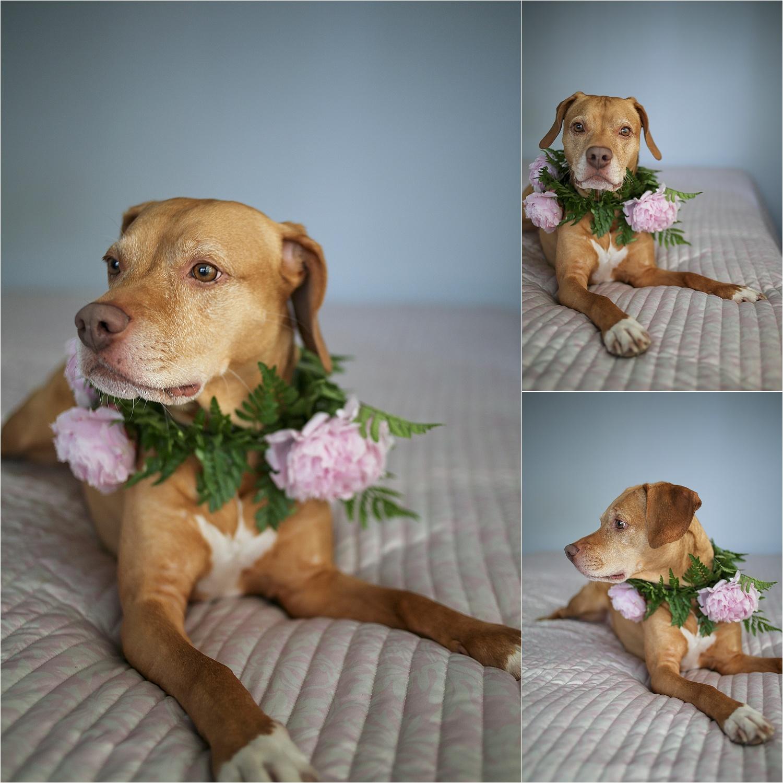 Blacksburg-Virginia-Pet-Photographer-Holly-Cromer_0010.jpg