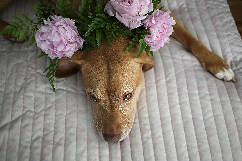 Blacksburg-Virginia-Pet-Photographer-Holly-Cromer_0011.jpg