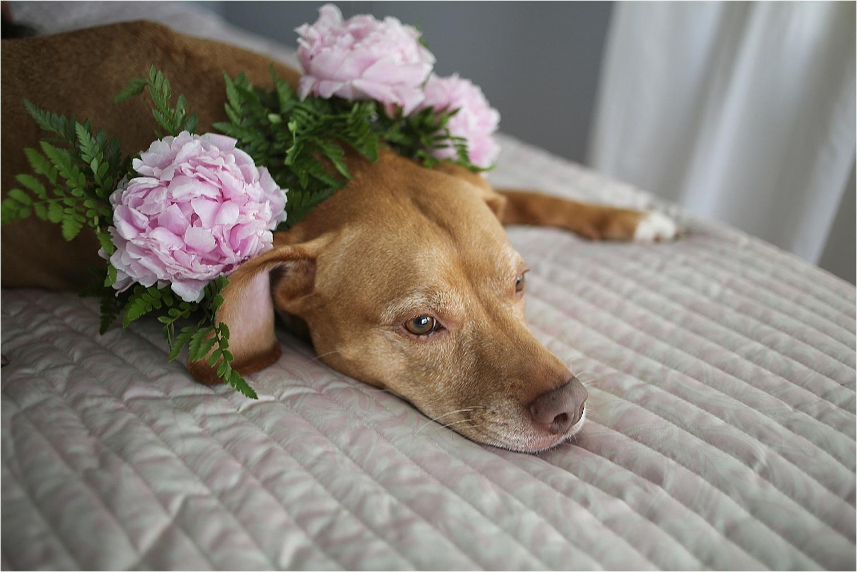 Blacksburg-Virginia-Pet-Photographer-Holly-Cromer_0012.jpg