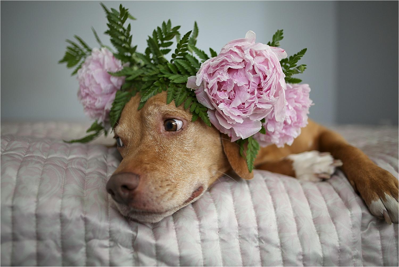 Blacksburg-Virginia-Pet-Photographer-Holly-Cromer_0013.jpg