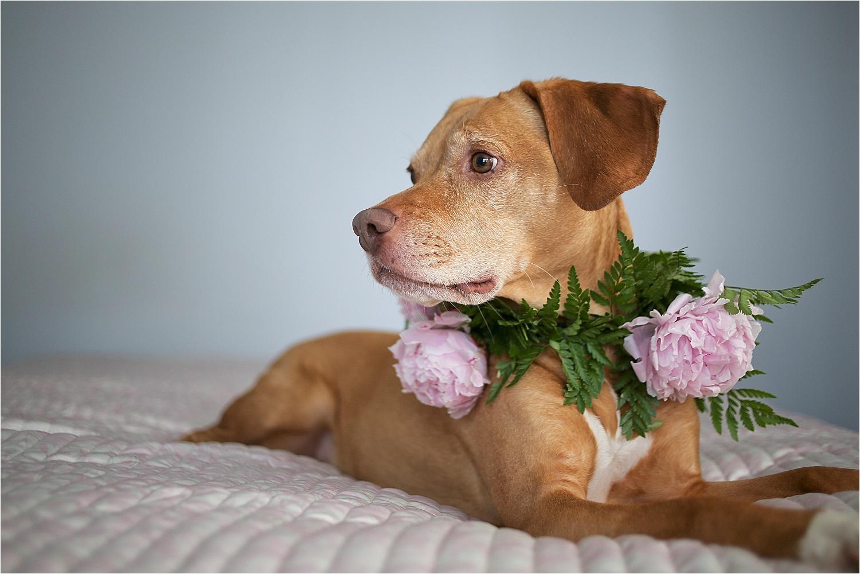 Blacksburg-Virginia-Pet-Photographer-Holly-Cromer_0015.jpg
