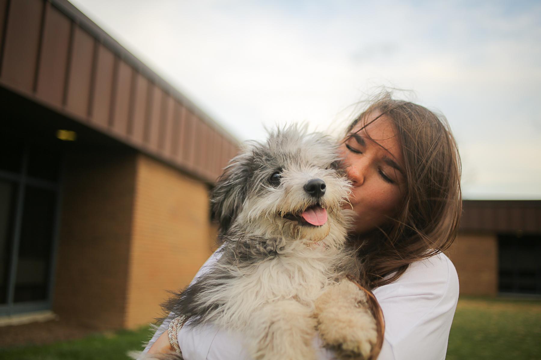 Mini Aussie Doodle Puppy | Blacksburg Pet Photographer, Holly Cromer