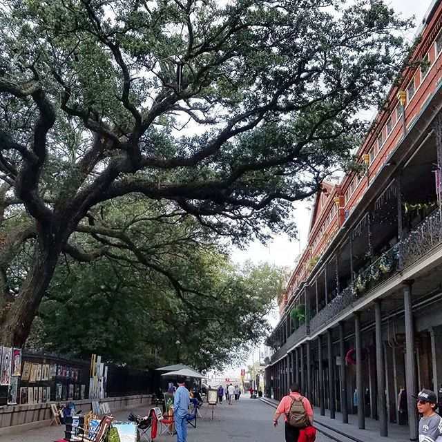 Trees would write such incredible books. They get so old, they see so much and they don't let talking get in the way of whats playing out bel9w them. . . . . . . . . #strangethoughts #imstill8yearsoldatheart #impossibletheoreticals #strangerthings #trees #thebigeasy #neworleans #frenchquarter #arborist #