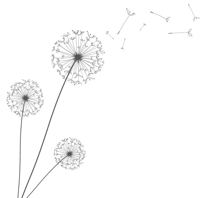 17. Dandelions