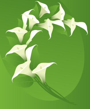 9. Tulips
