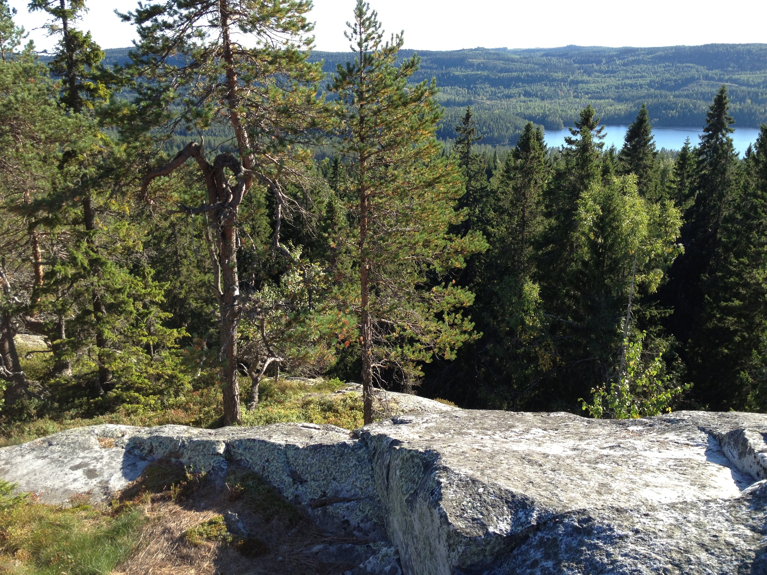 Paimenvaara (Koli National Park)