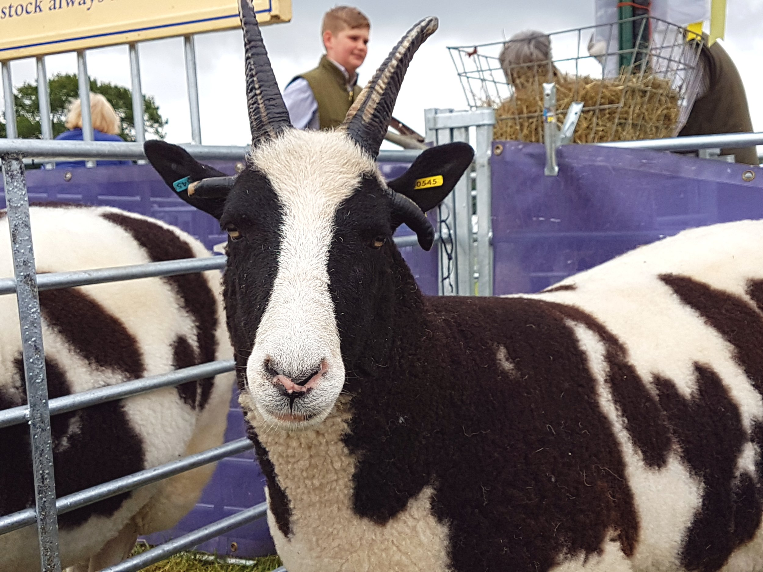 Tickets are now on sale for the Derbyshire County Show 2018 - Penguin PR: public relations, media and communications