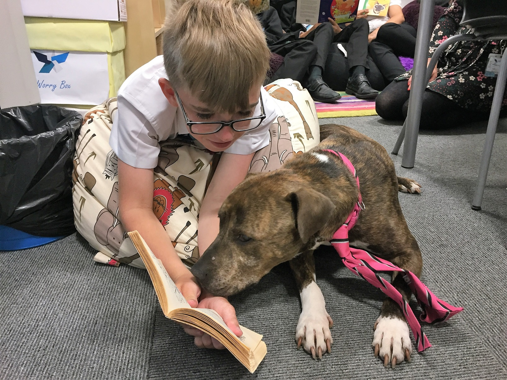 Shirebrook Academy's school dog Bella helps 11-year-old student Bailey Fisher with his reading after she was appointed as the school's official therapy pet. Penguin PR: public relations, media and communications