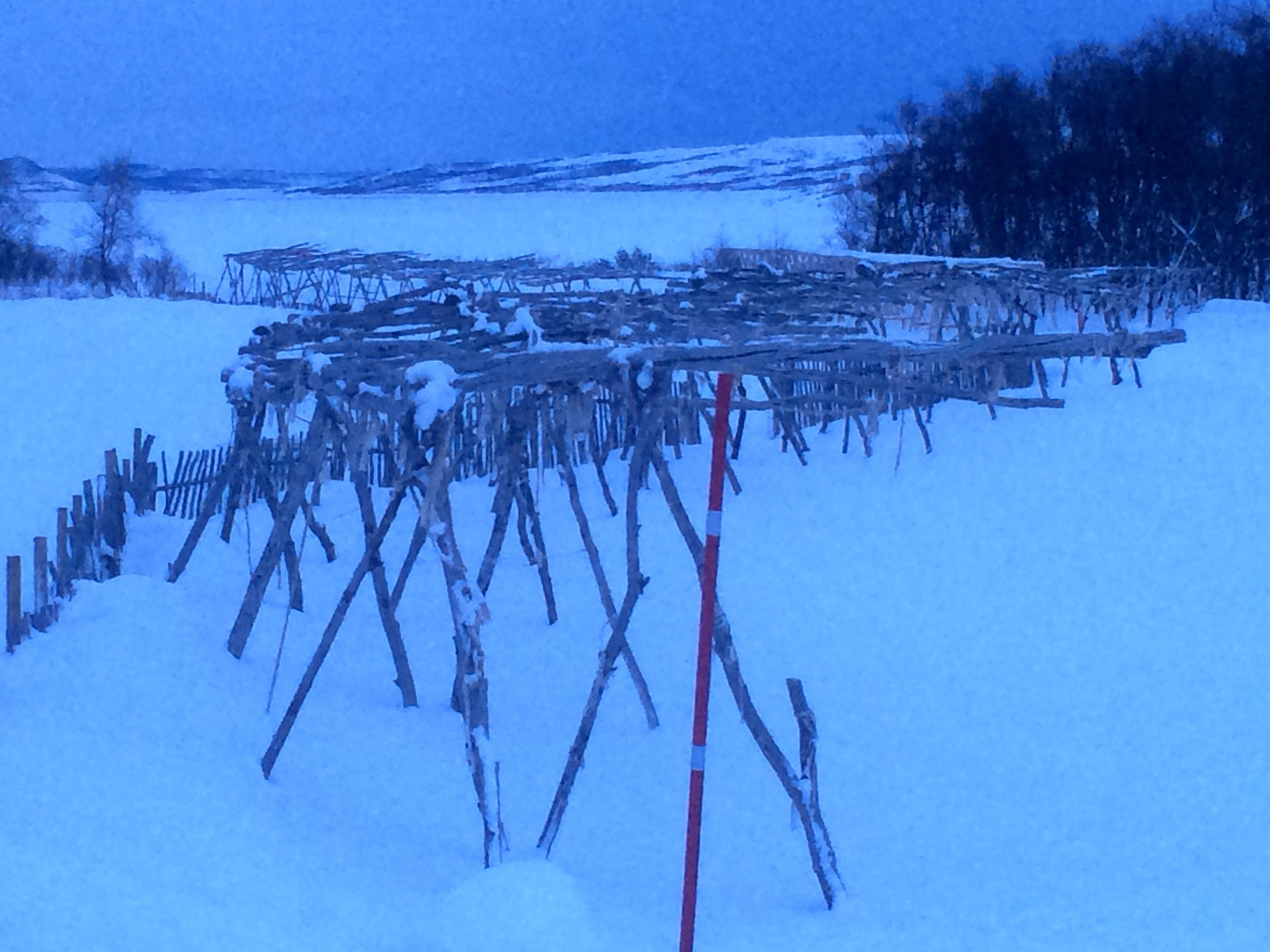 Fish drying racks at the Sami museum