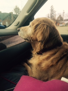 Katie on the road to Ottawa!