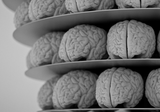 Brains via @neilconway on Flickr