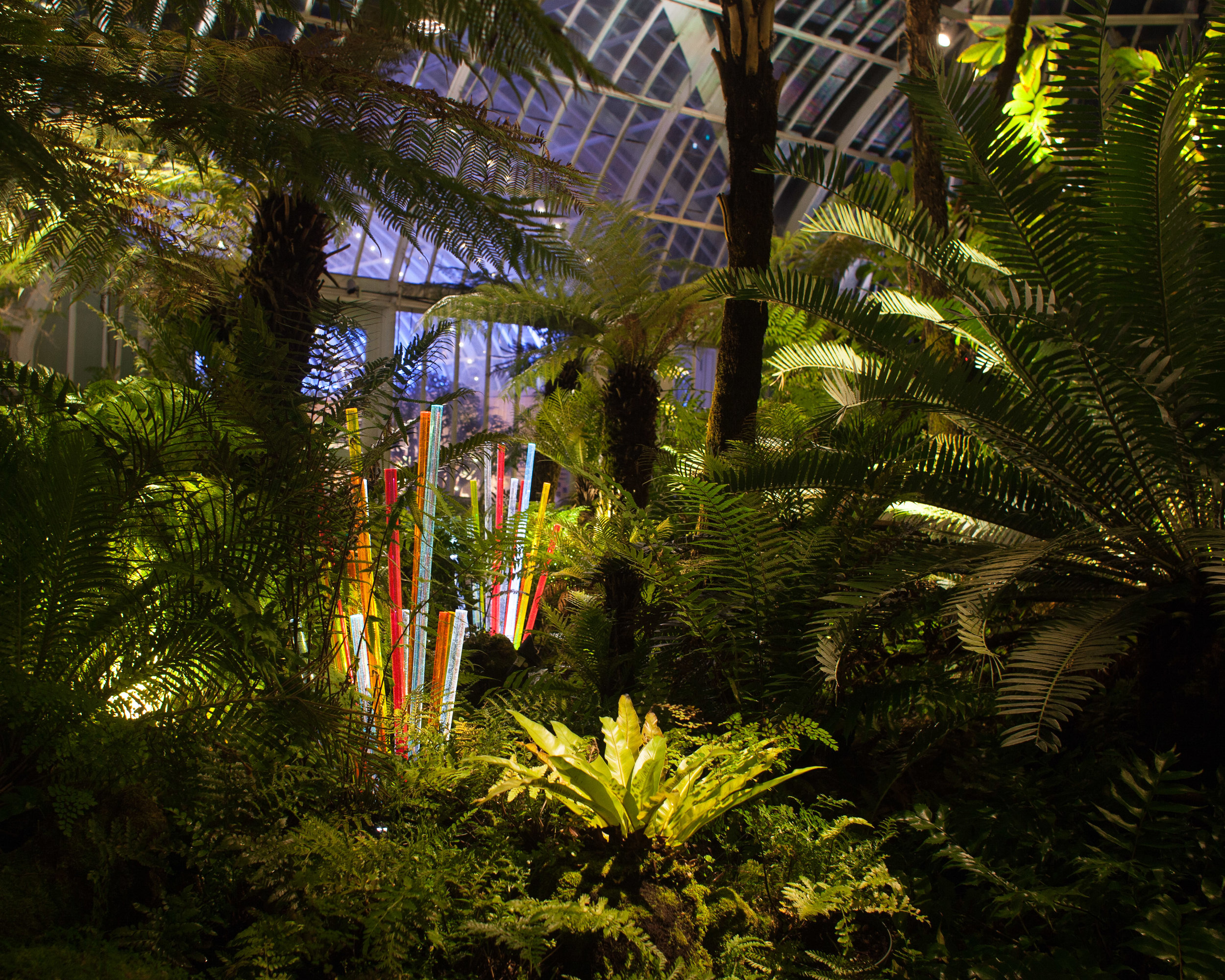 Phipps' light clusters are embedded throughout the dense Fern Room.