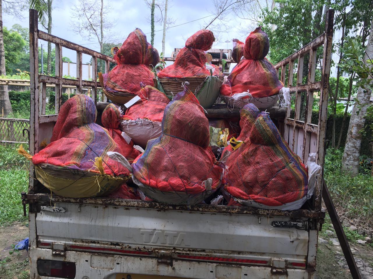 Supplying good quality Agarwood and Sandalwood saplings